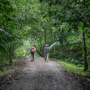 Panama Gamboa Regenwald