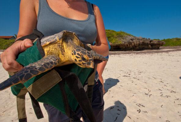 Voluntourismus Schildkröte Tier