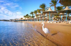 Luxussommer in Hurghada: 7 Tage Ägypten im 5* Hotel mit All Inclusive, Flug, Transfer & Zug für 63...