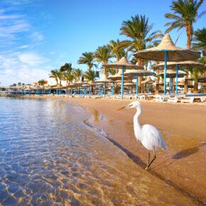 Urlaub in Hurghada: 7 Tage im 5* Strandhotel mit All Inclusive, Flug & Transfer nur 357€