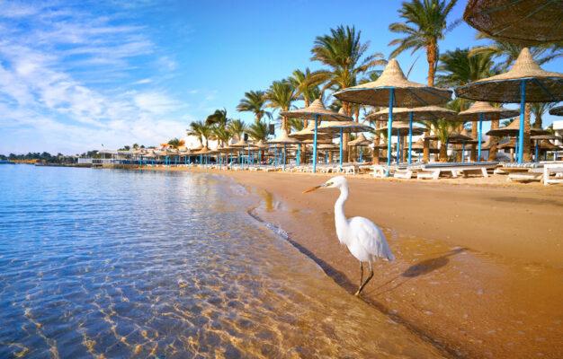 Ägypten Hurghada Reiher Strand