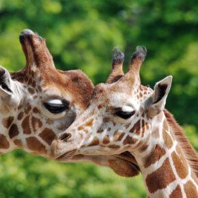Tierisch was los: Die 12 besten Zoos in Deutschland