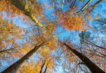Die Top 5 der schönsten & erholsamsten Wälder in Deutschland