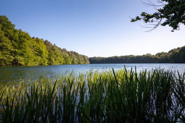 Deutschland Feldberger Seenlandschaft Schmaler Luzias See