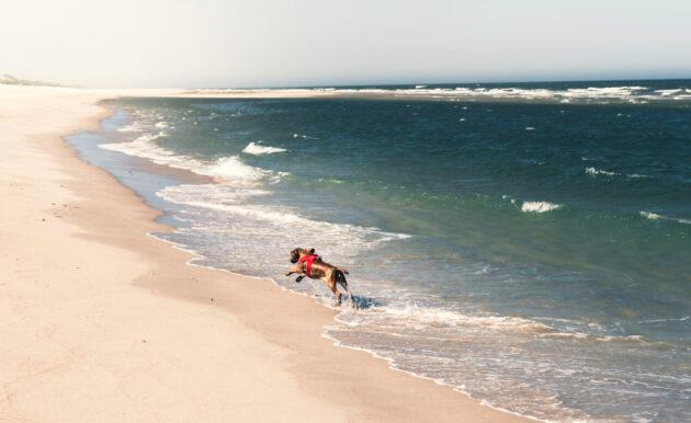 Deutschland Sylt Hund Strand