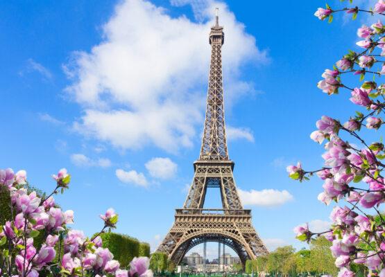 Frankreich Paris Eiffelturm Magnolien
