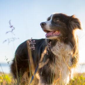 Sylt mit Hund: Der tierfreundliche Reiseguide mit Tipps für Anreise, Strände & Restaurants