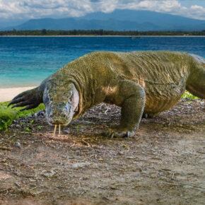 Tierschutz: Indonesien schließt die Dracheninsel Komodo