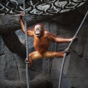 Leipzig Zoo Affe