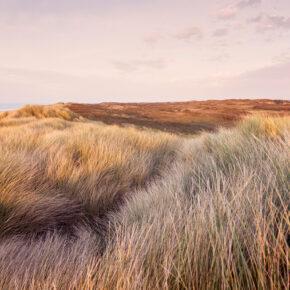 Neueröffnung in Zeeland: 5 Tage in einer nachhaltigen Lodge in der Natur ab 27€ p.P.
