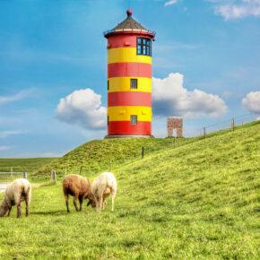 Nordsee Leuchtturm Pilsum Schafe