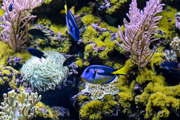 Sri Lanka Fische Indischer Ozean