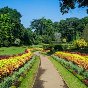 Sri Lanka Kandy Botanischer Garten