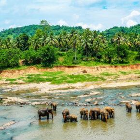 Sri Lanka Pinnawala