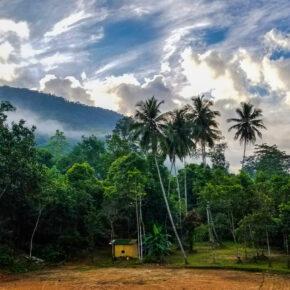 Sri Lanka Sinharaja