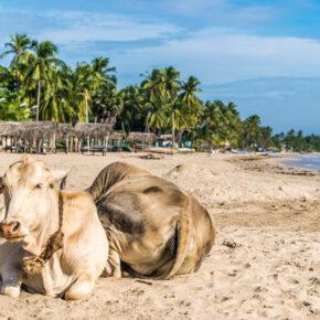 Sri Lanka Uppuveli Strand
