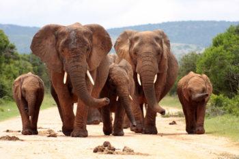 Südafrika: 9 Tage Johannesburg & Krüger Nationalpark mit Unterkunft, Eintritt & Flug nur 551€
