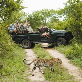Südafrika Leopard Jeep