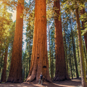 USA Kalifornien Giant Forest Sequoia Nationalpark