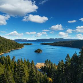 USA Lake Tahoe Baeume