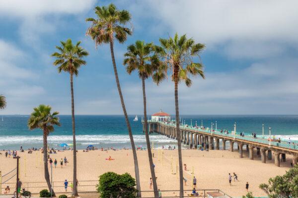 USA Los Angeles Manhattan Beach Palmen