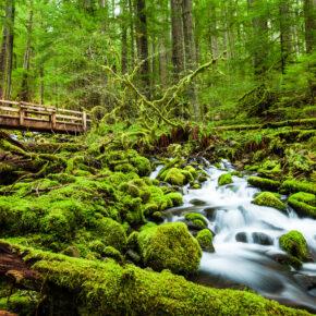 USA Washington Olympic Nationalpark