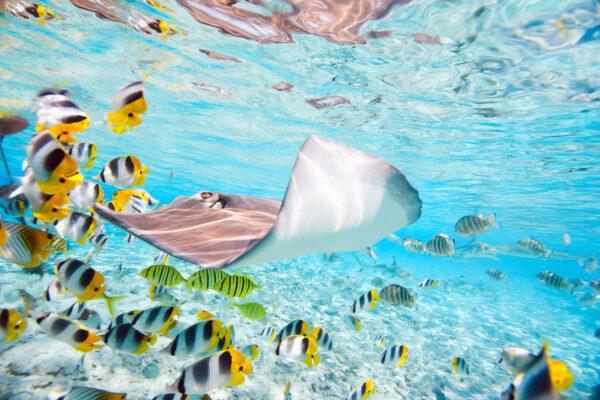 Bora Bora Unterwasserwelt