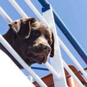 Kreuzfahrt mit Hund: Wichtige Infos & Angebote