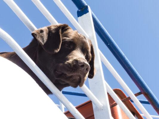 Kreuzfahrt Hund