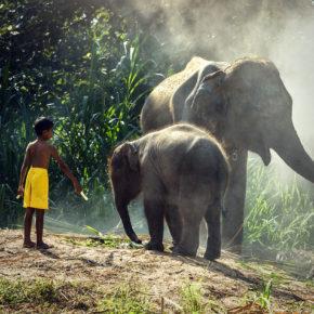 Vietnam Elefanten