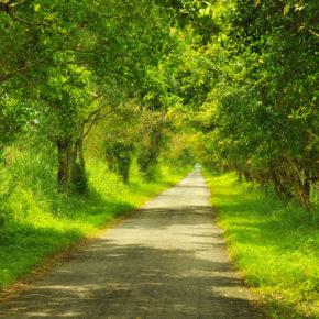 Vietnam Wald Thuong