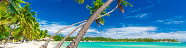 Fidschi Palmen Strand Panorama