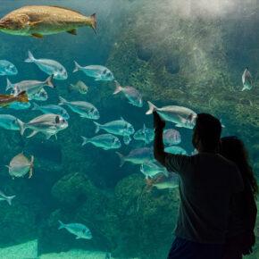 Griechenland Kreta Aquarium
