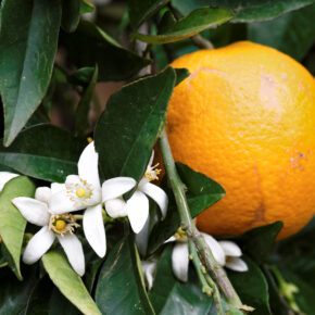 Griechenland Kreta Orange