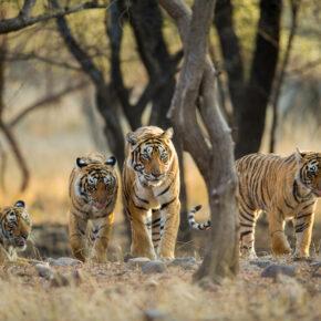 Indien Ranthamhore Nationalpark