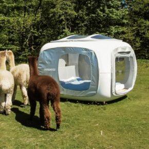 Wochenende mit Alpakas: 2 Tage im Schlafwürfel auf Alpaka-Hof nahe Hamburg nur 80€