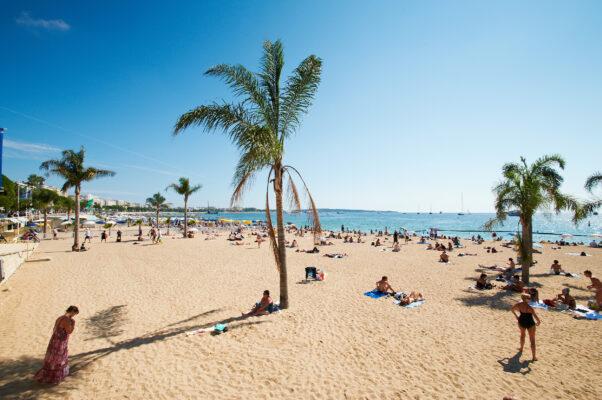 Spanien Bbarcelona Beach Palme