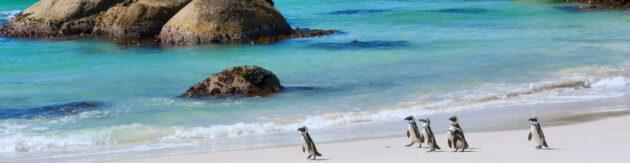 Südafrika Kapstadt Strand Pinguine