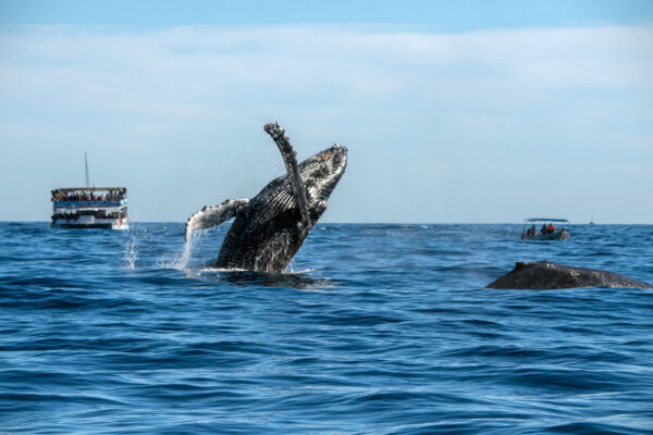 Whale Watching Pazifik