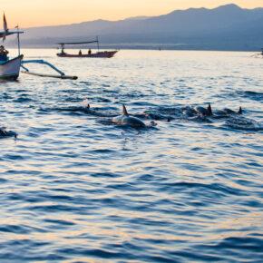 Bali Lovina Delfine