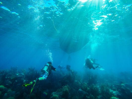 Bermuda Diving Reef