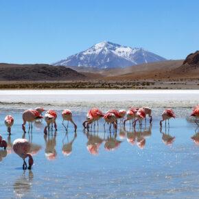 Salzwüste Bolivien: Tipps für Euren Besuch der Salar de Uyuni