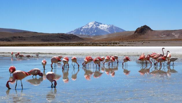 Salzwüste Bolivien