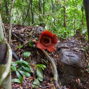 Indonesien Borneo Gunung Gading