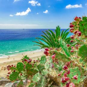 Kracher: 5 Tage Fuerteventura im 4* Hotel in Strandnähe mit All Inclusive, Flug, Transfer & Zug nur 306€