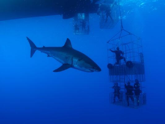 Südafrika White Shark Cage