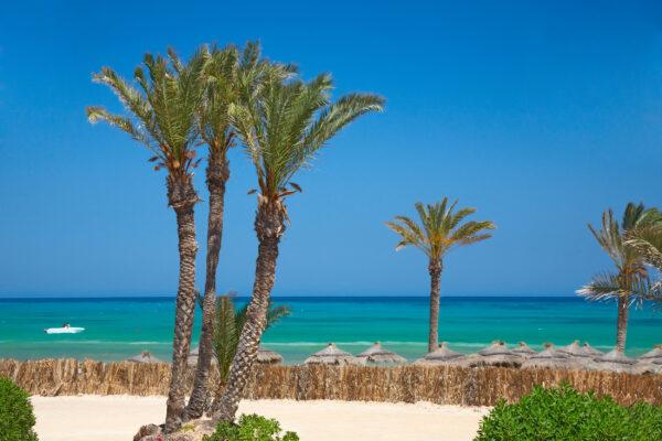 Tunesien Strand Sonne Palme