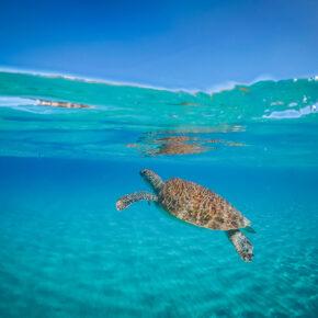Tipps für einen Ausflug nach Klein Curaçao: Tauchen, Schnorcheln & Entspannung im Paradies