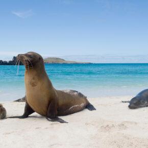 Atemberaubende Galapagosinseln: Flüge nach San Cristobal hin & zurück nur 639€