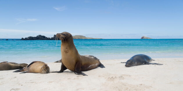 Ecuador Galapagos Inseln Seelöwe Strand